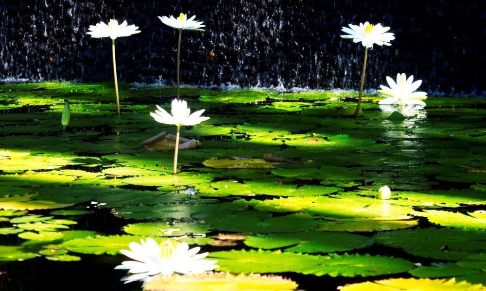 lotus melbourne yoga studio testimonial